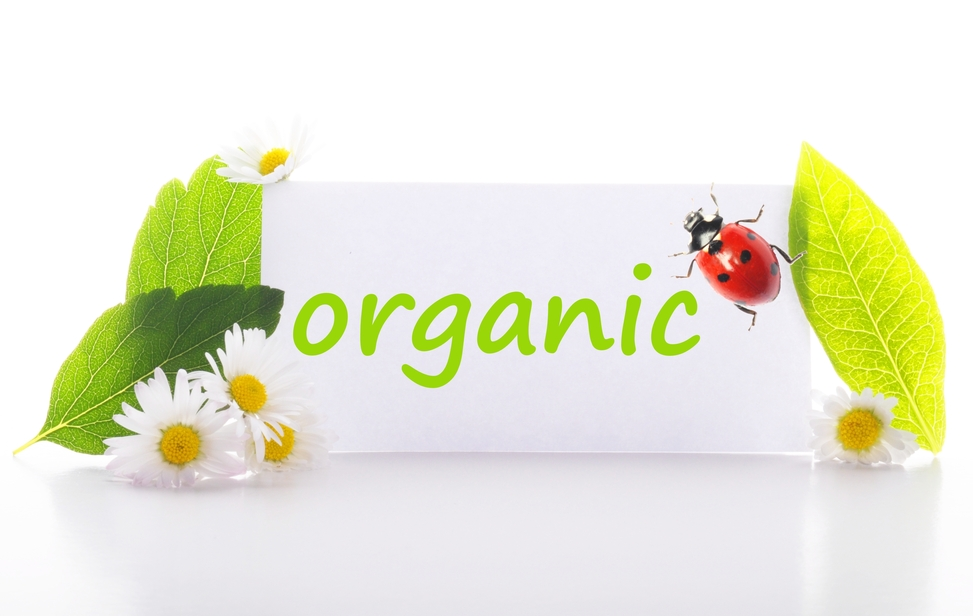 Online Organic & eco-Friendly Businesses