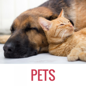 pure-ecommerce-pets-blog