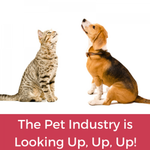Why You Should Start an Online Pet Business